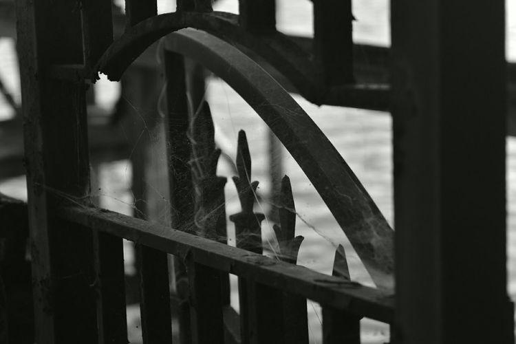 North Carolina Novice Fence Cobweb Fall_collection Halloween_Collection Blackandwhite Blackandwhitephotography