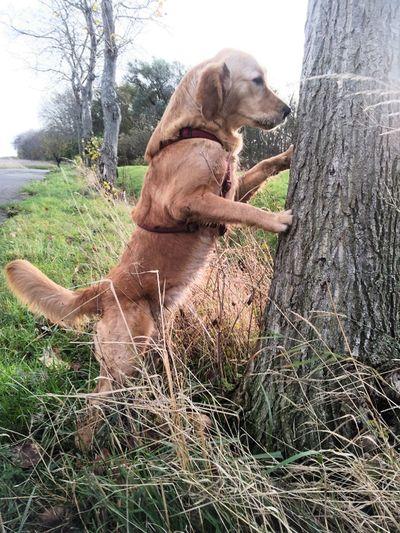Dog Dogs Life