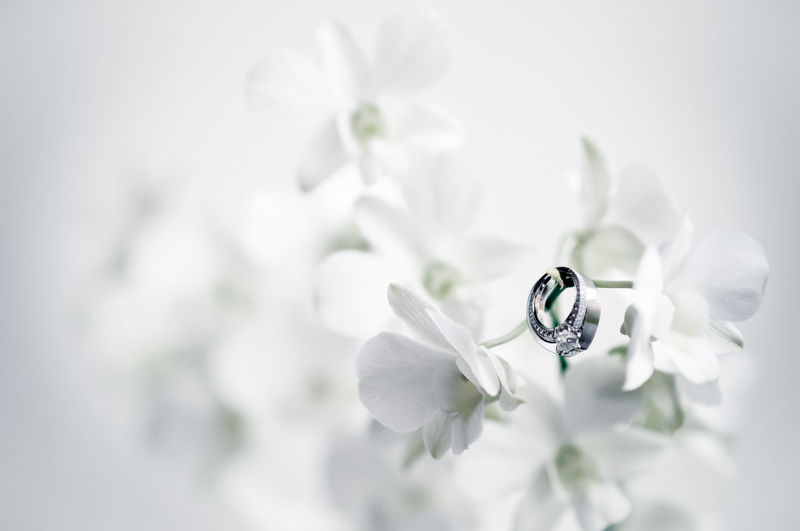 Background Blossom Close-up Flower Flowers Single Flower Wedding Wedding Photography Wedding Ring