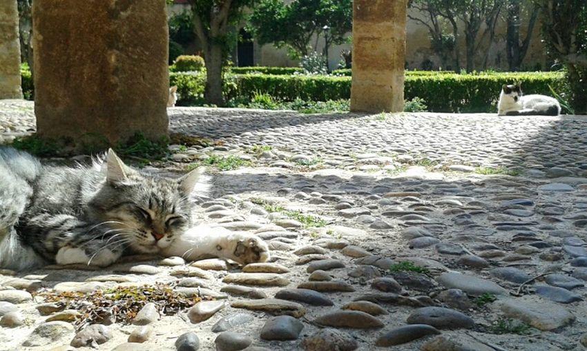 No People EyeEm Gallery EyeEm Morocco Sunnyday☀️ Morocco 🇲🇦 Morocco Rabat One Animal Animal Themes Cat Photography Cat♡ Cats 🐱 Cats Of EyeEm Cats Day Cat Lovers Sunnyday