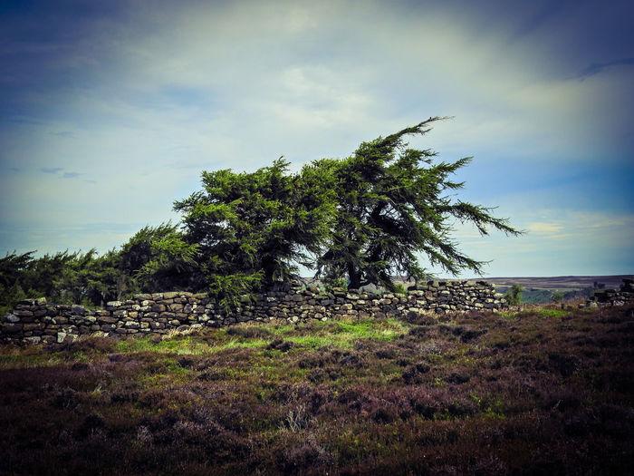 North Yorkshire Moors Tree Sky Grass Landscape Cloud - Sky Idyllic Tranquil Scene Scenics