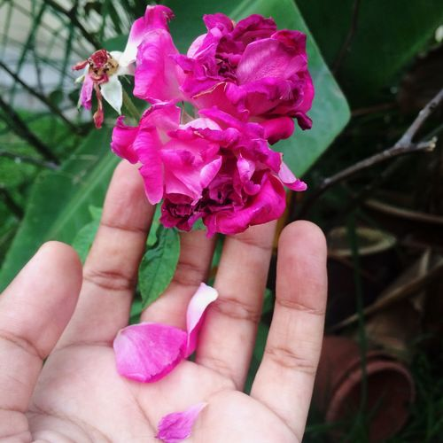 Roses Hand