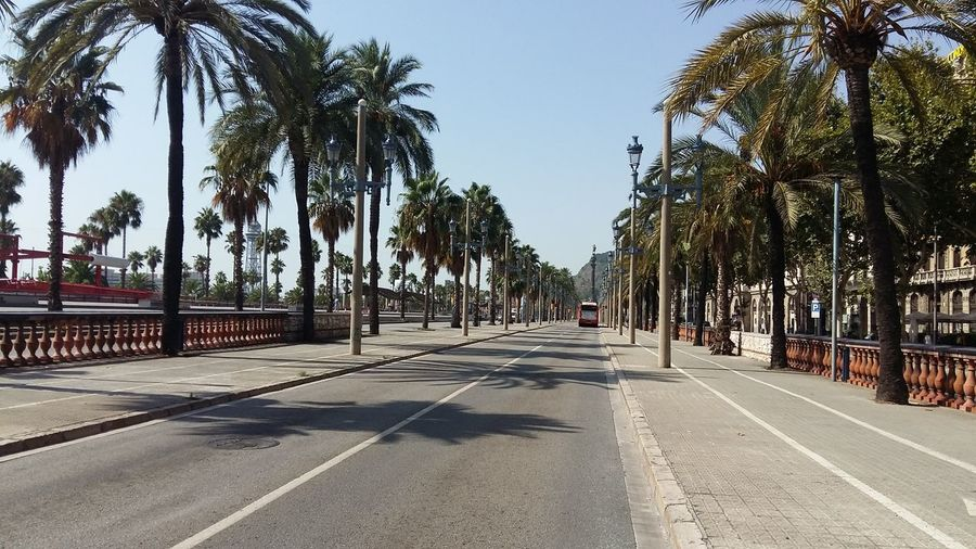 18 August 2017 Tree Palm Tree Outdoors Empty Road Empty Places empty city No People Urbanphotography Streetphotography Urban Exploration Terrorists Terror Van Silence No People Illuminated Pain Solidarity DAESH Street Scenes Barcelona Outdoors EyeEm Selects Urban Lifestyle Silnve
