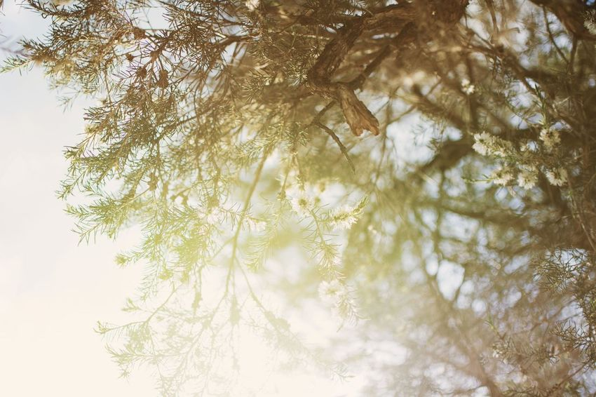 Tree Nature Beauty In Nature No People Outdoors Sky Day Beautiful Nature EyeEm Nature Lover Nikon D7100 EyeEm Best Shots EyeEm Gallery Eyeemphotography Eyeem Market Nikontop Nikon Nature Light And Shadow Taking Photos Enjoying LifeNikonphotography Nikon35mm Nikon35mm 1.8g Nikonaustralia Nikonphotographer
