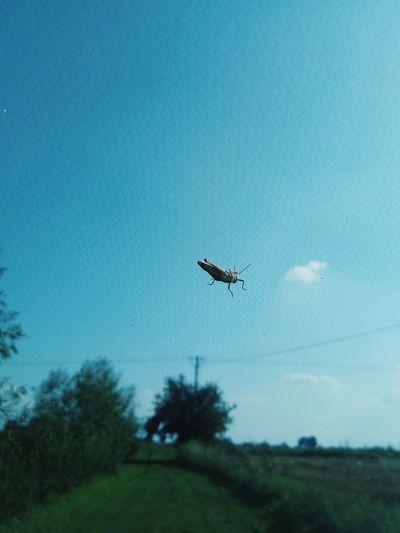 Fromthecar Grasshopper Flying Mid-air Tree Bird Sky