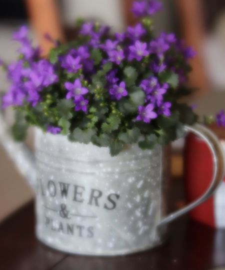 Spring treat Flower Freshness Indoors  Metal Container No People Potted Flowers Purple Soft Focus