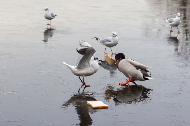 Birds eating bread by lake