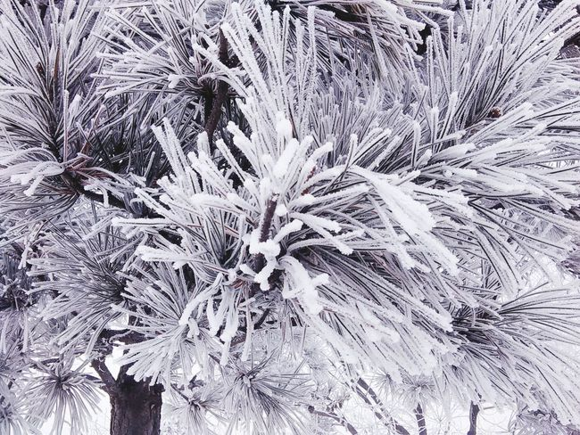 Icey Trees :) Icey Day Icey❄ Iceytree Icey Cold Days My Winter Favorites Winterwonderland Winter Morning Snow ❄ Cold Temperature Cold Winter ❄⛄ Snow❄⛄ It's Cold Outside