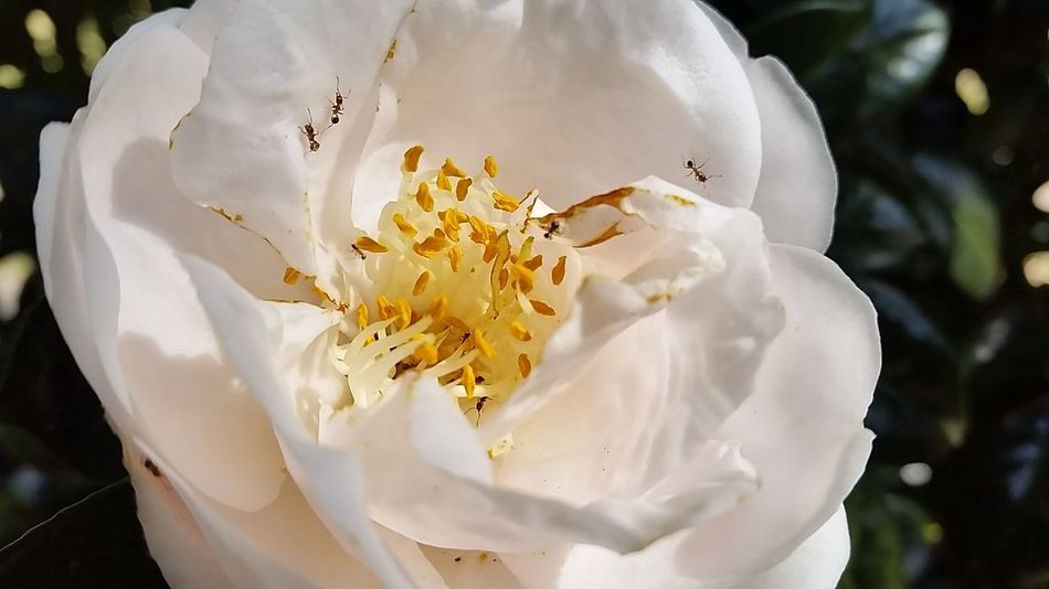 South Africa Beauty In Creation  Nature = God @ Work White Flower The White Collection