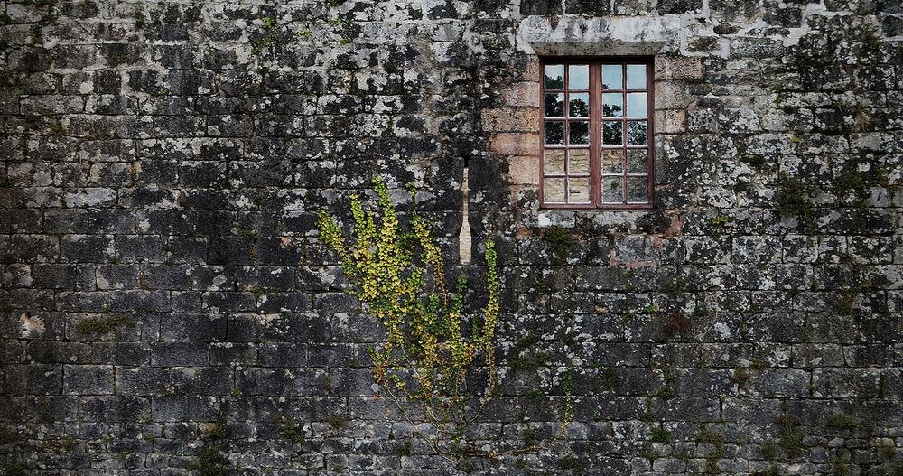 Abandoned Architecture Château Fenêtre Lierre Monumenthistorique Mur Outdoors Wall Window