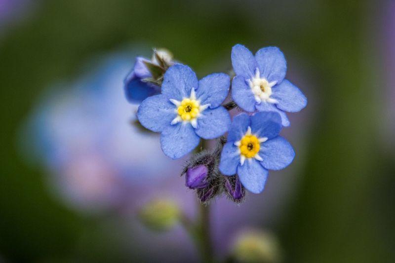 Flowers Flower Macro LongwoodGardens Showcase: February EyeEm Best Shots The Week On Eyem Garden Blue Blue Flowers