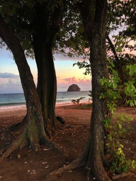 diamondot Sea Martinique