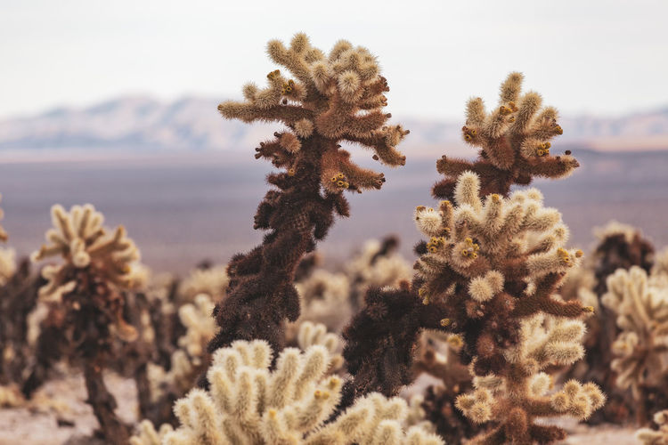 Close-up of plants at desert