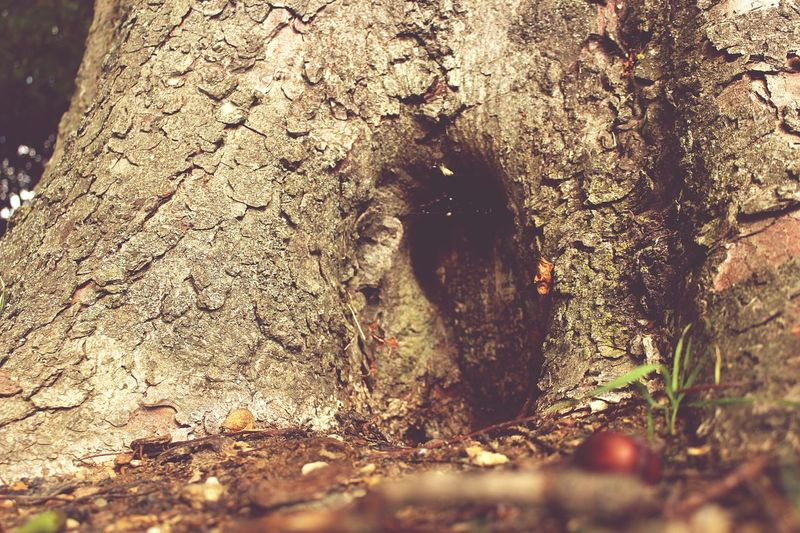 Tree Trunk Nature Outdoors No People Tree Close-up Day Grass Water Texture Detail Groundlevel Sunlight Door Opening Magical