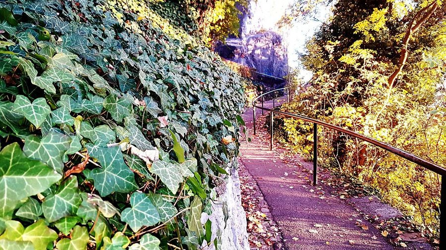 Outdoors Nature Takeawalkoutside Takepictures Onasunnyday Schlossberg Graz Leaf Naturelovers Nature Photography Amazing Nature Green Color Amazing Day ♡ Amazing Place Green Nature Multi Colored Graz Austria 🇦🇹