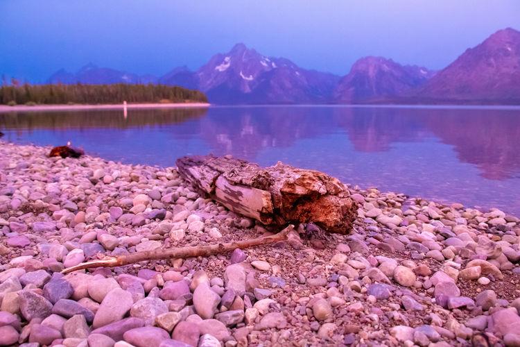 Drift wood log