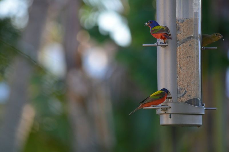 Close-Up Of Birds Perching On Bird Feeder