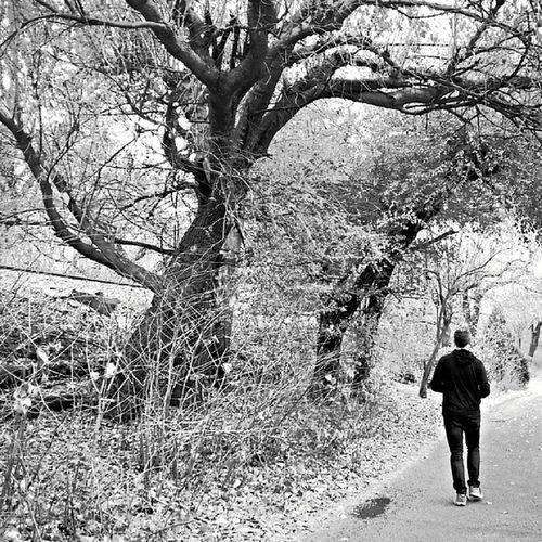 Autumn Nakedtrees WalkingAway Blackandwhitephotography ink361_standingsolo inkmobile ink361 november fallphotography @instamobs