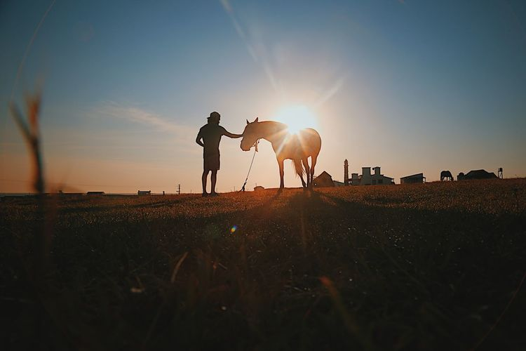 Silhouette mid adult man with horse standing on field against sky during sunset