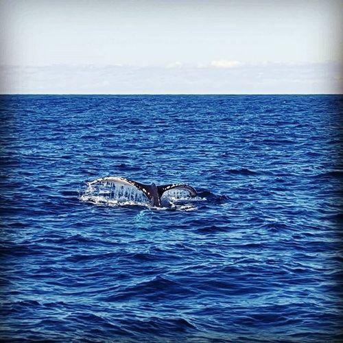 Balene Sydney Ciaone MareMosso Sisters Cinesichevomitano Giornatastupenda 🐳🌊😍