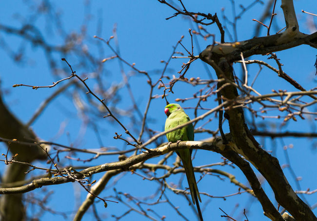 Animals In The Wild Nature Papageien Wildlife & Nature Animal Photography Animal Wildlife Bird Papagei Parrot Parrots Parrots Beauty In Nature Parrots On Tree Wildlife