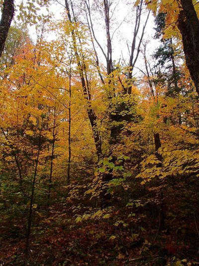 Couleurs d'automne - Fall Foliage Foliage Fall Colors Tree Plant No People Nature Growth Beauty In Nature Tranquility Forest