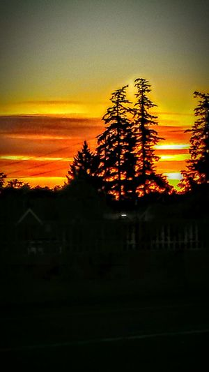 43golden Moment Sunrise_Collection Beautiful Morning Sky On Fire Silhouettes Beauty In Nature Beautyineverything Effortless Beauty Wildlife & Nature I ❤Oregon Willamette Valley Sky And Clouds Collection I❤this App I ❤this Picture
