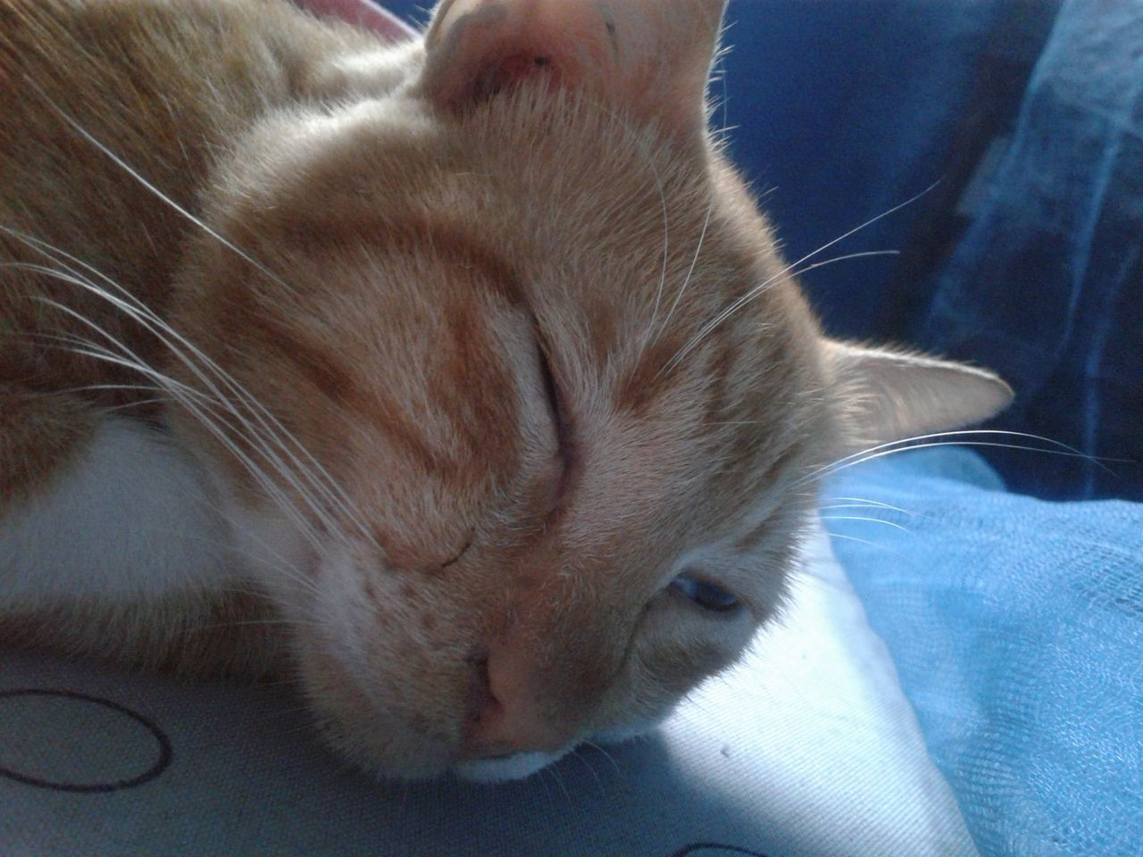 pets, one animal, domestic animals, mammal, animal themes, domestic cat, indoors, eyes closed, sleeping, feline, relaxation, close-up, no people, day