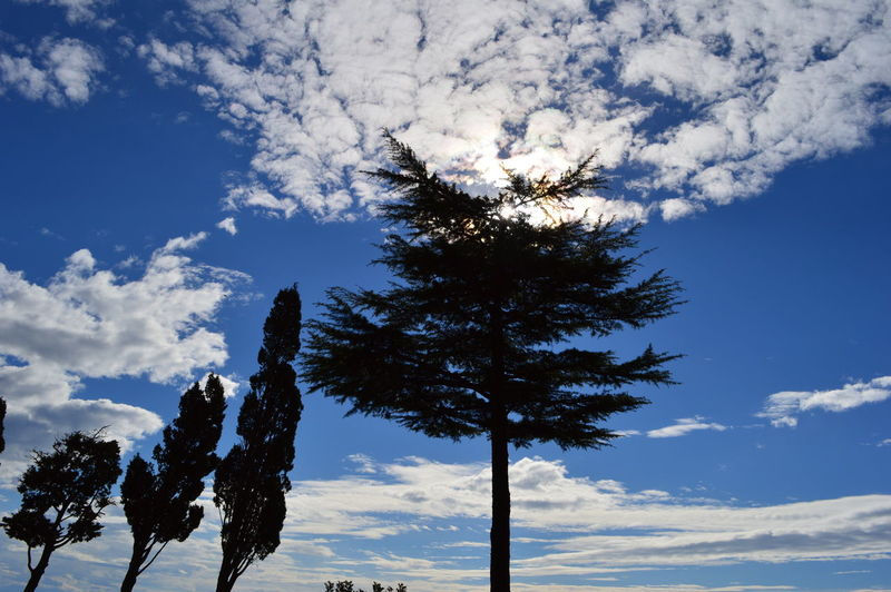Trees in the middle of the sky. #green #Nature  #sky Beauty In Nature Blue Blue Sky Bluesky Cloud - Sky Clouds Clouds And Sky Cloudy Day Good Weather Growth Low Angle View Outdoors Tranquil Scene Tranquility Tree Tree And Sky TreePorn Trees Trees And Sky