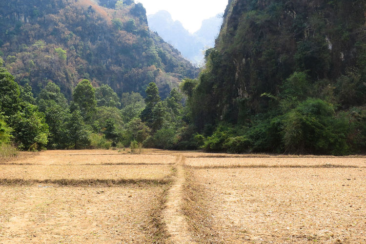 Beauty In Nature Day Growth Landscape Laos Mountain Nature No People Outdoors Scenics Sky Tranquil Scene Tree