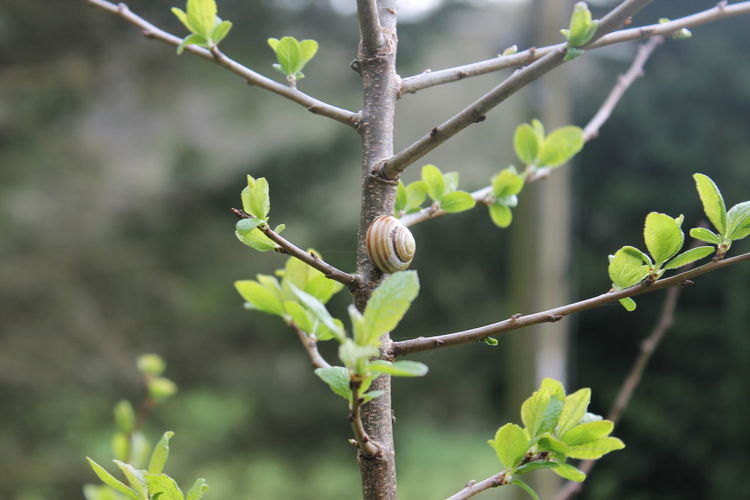 For the love of tree snails Leaf Plant Nature Animal Wildlife Branch Tree Focus On Foreground Day Close-up Outdoors Growth One Animal No People Beauty In Nature Animals In The Wild Freshness Fragility Flower Perching Snail