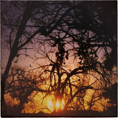 Sunset Trees Birds IPhoneography