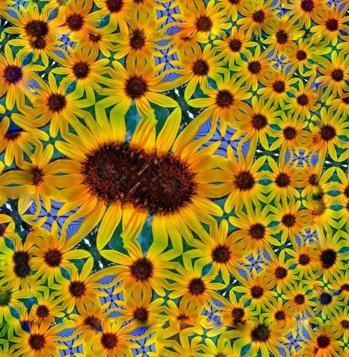 """Collidiscope Nature"" Exceptional Photographs Popular Photographs Details Of Nature Details Textures And Shapes Beautiful World Swirly EyeEm Flower Flowers Of EyeEm Beautifully Designed Reflections Life Is Beautiful Sunflower Magic Flower Power Abstract Nature Designs Pattern Pieces Yellow Flower Yellow Color Repetition Repeating Patterns Flower Head Flower Petal Full Frame Close-up Plant Pollen Sunflower Stamen Blooming"