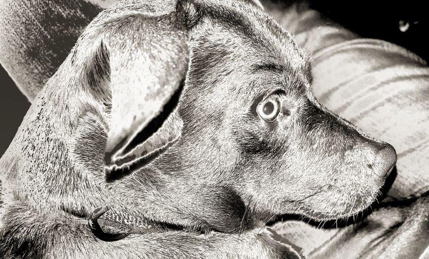 Things I Like Takingpicturesofmydog Dogportraiture B&wphotogtaphy Dog Dogprofile Alert Dog Profile Photo Study EyeEm Gallery