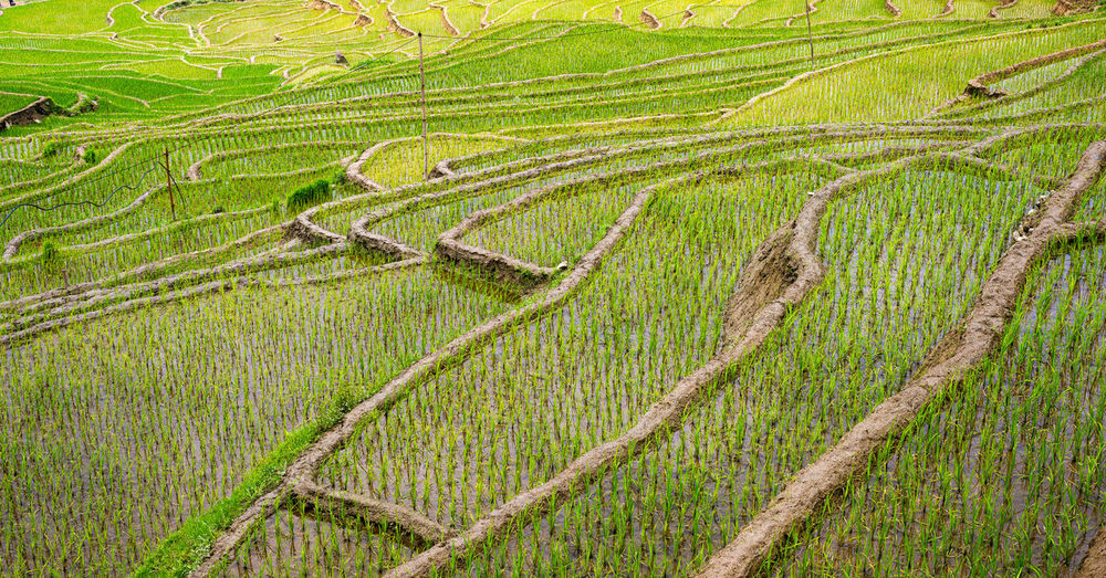 Sapa terraced rice fields Plant Landscape Beauty In Nature Land Field Growth Scenics - Nature Environment Tranquil Scene Nature No People Green Color Outdoors Rice Terraced Field Vietnam Travel Travel Destinations Sapa Mountains Agriculture Rural Scene Crop  Farm Terrace Rice Paddy Plantation