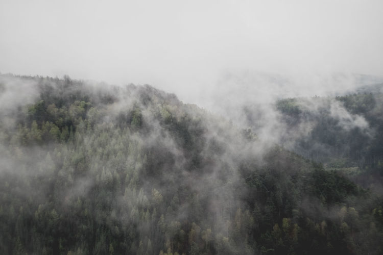 Panoramic shot of trees in foggy weather
