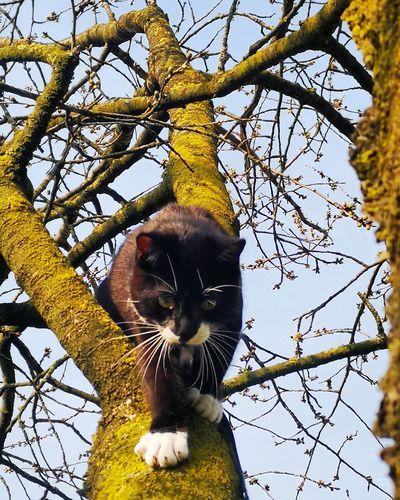 Cat Cats 🐱