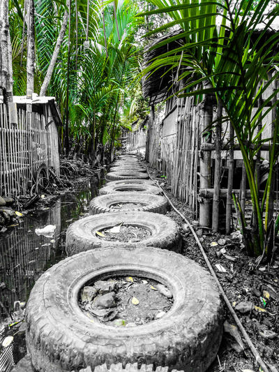 Tree Plant Walkway Pathway Footbridge Treelined The Way Forward
