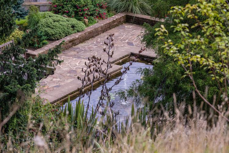 Bird amidst plants in water