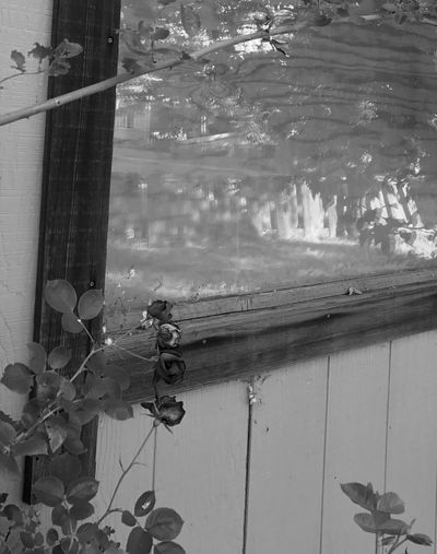 Day Outdoors Window Water No People Hanging Built Structure Building Exterior Leaf Plant Architecture Nature Close-up Dark By Tisa Clark🌑🌌 Black & White By Tisa Clark