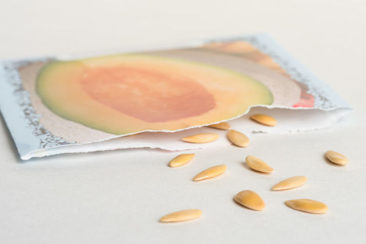 Cantaloupe Seeds Seed Seeds Packet Envelope White Background Isolated Garden Macro Nobody Close Up Spill Spring Sow Agriculture Nature Close-up Cantaloupe Melon Sierra Gold