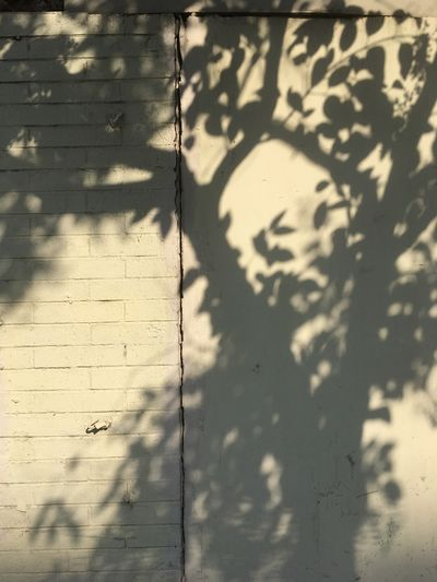 #EyeEmNewHere Shadow Sunlight No People Full Frame Pattern Wall - Building Feature Backgrounds Day Textured  Close-up Outdoors Built Structure Nature Focus On Shadow Architecture Creativity Graffiti Wall Shape Design