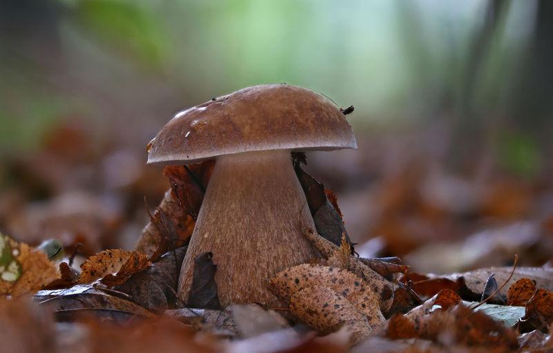Close-up of mushroom growing on field