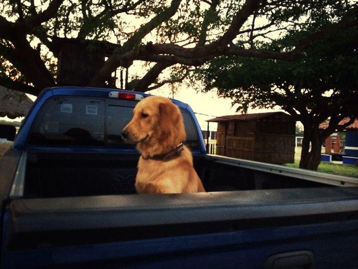 Exploring Enjoying The Sun Bruno