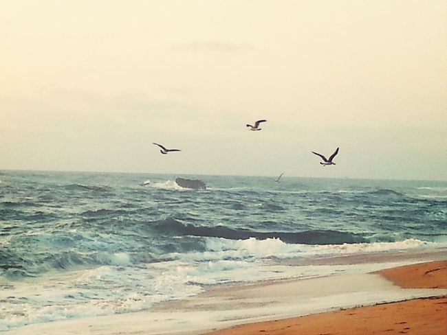FLY fly little birds Beach Birds Photography