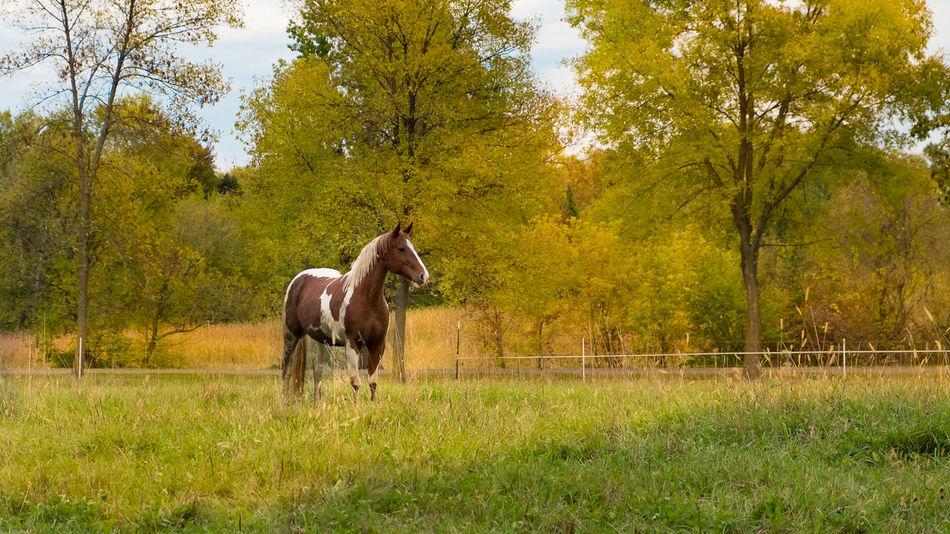 Plant Tree Mammal Animal Animal Themes Horse Land One Animal Field Grass Livestock Domestic Domestic Animals No People