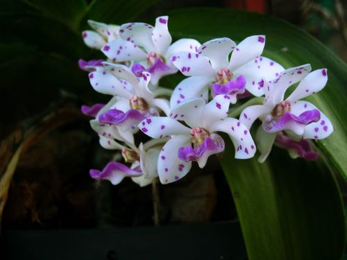 Flower Nature Fragility Freshness Beauty In Nature Petal Growth Plant Purple Close-up Orchid Flower Head Outdoors No People Day Water Rhododendron Vanda Orchids กล้วยไม้ Samutprakarn In Thailand Beauty In Nature