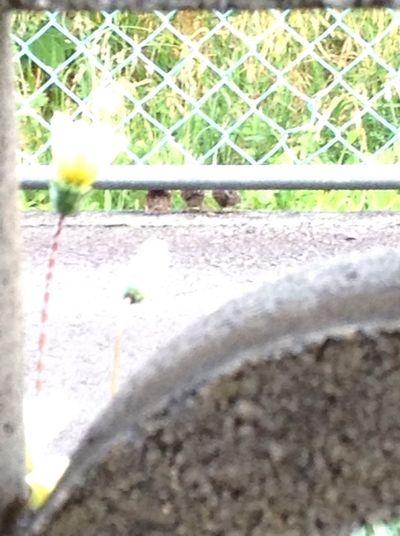 小鳥 三兄弟 すずめ Bird Day No People Nature Selective Focus Plant Outdoors Sunlight