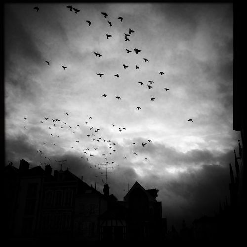Birds The Week On Eyem Shootermag NEM Street Blackandwhite
