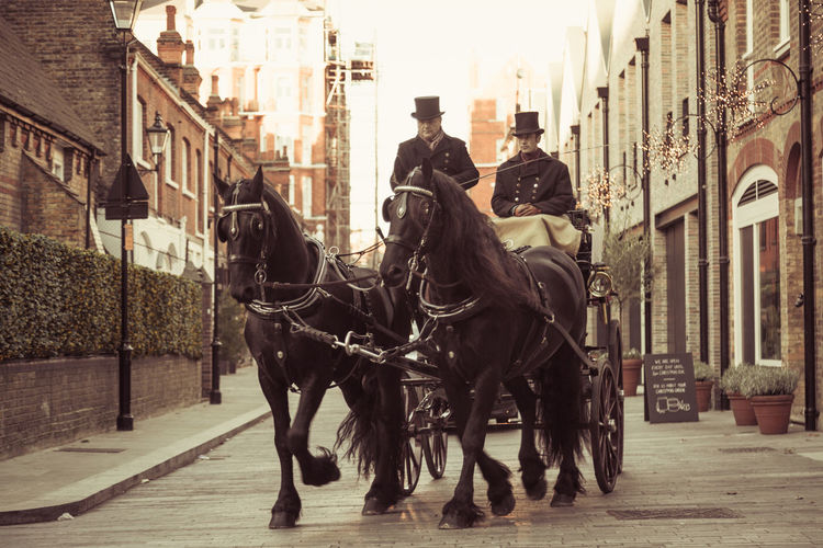 Black horse and carriage riding through a cobbled street in the Royal boroughs of Kensington and Chelsea. Architecture Building Exterior Canon Canon 5d Mark Lll Chelsea City Cobbled Streets Day Dickensian Domestic Animals England Equestrian Equestrian Life Horse Horse And Carriage Kensington Kensington And Chelsea London Mammal Outdoors Royal Royalty Victorian Vintage Working Animal
